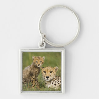 Cheetah, Acinonyx jubatus, with cub in the Key Ring
