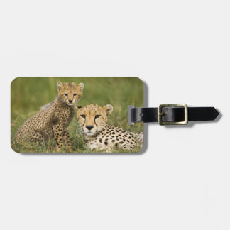 Cheetah, Acinonyx jubatus, with cub in the Luggage Tag