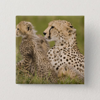 Cheetah, Acinonyx jubatus, with cub in the Masai 15 Cm Square Badge