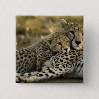 Cheetah, Acinonyx jubatus, with cub in the Masai 2 15 Cm Square Badge