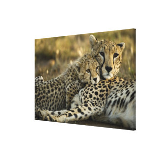 Cheetah, Acinonyx jubatus, with cub in the Masai 2 Canvas Print