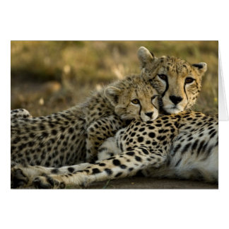 Cheetah, Acinonyx jubatus, with cub in the Masai 2 Card