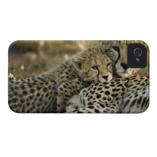 Cheetah, Acinonyx jubatus, with cub in the Masai 2 Case-Mate iPhone 4 Case