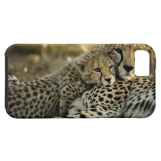 Cheetah, Acinonyx jubatus, with cub in the Masai 2 iPhone 5 Cover