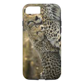 Cheetah, Acinonyx jubatus, with cub in the Masai 2 iPhone 8/7 Case