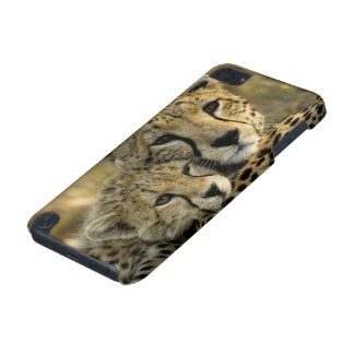 Cheetah, Acinonyx jubatus, with cub in the Masai 2 iPod Touch (5th Generation) Covers
