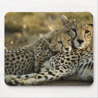 Cheetah Acinonyx jubatus with cub in the Masai 2 Mousepads
