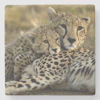 Cheetah, Acinonyx jubatus, with cub in the Masai 2 Stone Coaster