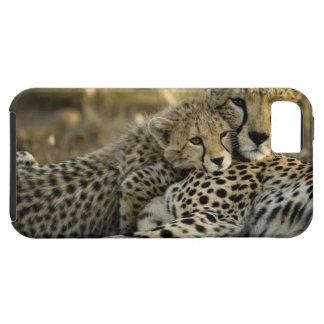 Cheetah, Acinonyx jubatus, with cub in the Masai 2 Tough iPhone 5 Case