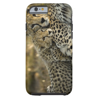 Cheetah, Acinonyx jubatus, with cub in the Masai 2 Tough iPhone 6 Case