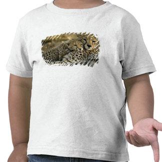 Cheetah, Acinonyx jubatus, with cub in the Masai 2 Tee Shirt