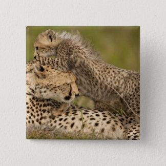 Cheetah, Acinonyx jubatus, with cub in the Masai 3 15 Cm Square Badge