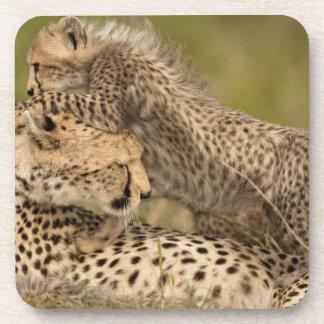 Cheetah Acinonyx jubatus with cub in the Masai 3 Drink Coasters