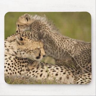 Cheetah Acinonyx jubatus with cub in the Masai 3 Mouse Pad