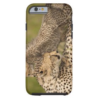 Cheetah, Acinonyx jubatus, with cub in the Masai 3 Tough iPhone 6 Case