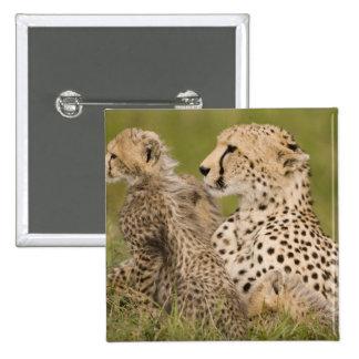 Cheetah, Acinonyx jubatus, with cub in the Masai 15 Cm Square Badge