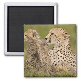 Cheetah Acinonyx jubatus with cub in the Masai Magnet
