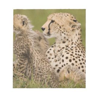 Cheetah, Acinonyx jubatus, with cub in the Masai Memo Pad