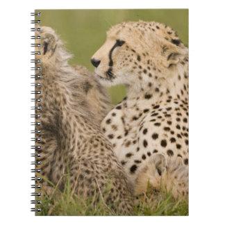 Cheetah, Acinonyx jubatus, with cub in the Masai Notebook