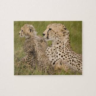 Cheetah, Acinonyx jubatus, with cub in the Masai Puzzle