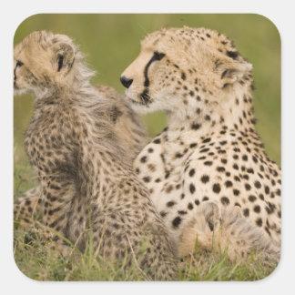Cheetah, Acinonyx jubatus, with cub in the Masai Square Sticker