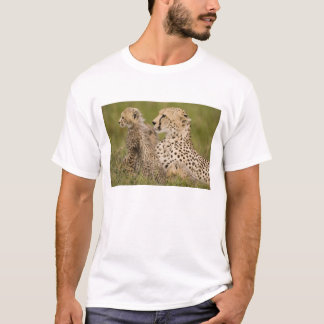 Cheetah, Acinonyx jubatus, with cub in the Masai T-Shirt