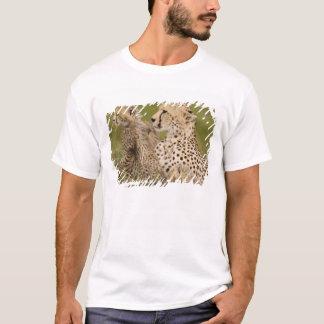 Cheetah, Acinonyx jubatus, with cub in the Masai T-Shirt
