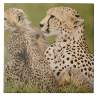 Cheetah, Acinonyx jubatus, with cub in the Masai Large Square Tile