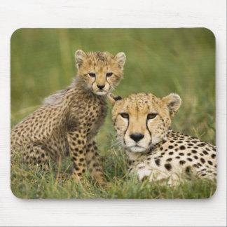 Cheetah Acinonyx jubatus with cub in the Mousepads