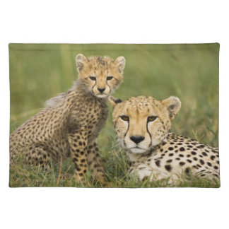 Cheetah, Acinonyx jubatus, with cub in the Placemat