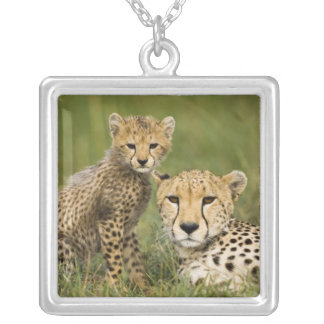 Cheetah, Acinonyx jubatus, with cub in the Silver Plated Necklace