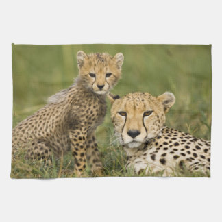 Cheetah, Acinonyx jubatus, with cub in the Towels