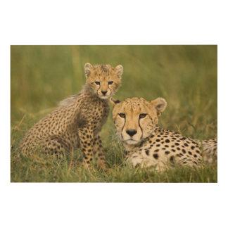 Cheetah, Acinonyx jubatus, with cub in the Wood Canvas