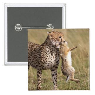 Cheetah (Acinonyx jubatus) with jackrabbit kill, 15 Cm Square Badge