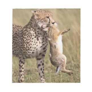 Cheetah (Acinonyx jubatus) with jackrabbit kill, Memo Pads