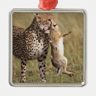 Cheetah (Acinonyx jubatus) with jackrabbit kill, Silver-Colored Square Decoration