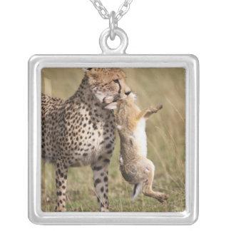 Cheetah (Acinonyx jubatus) with jackrabbit kill, Silver Plated Necklace