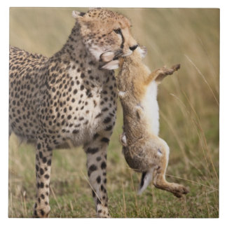 Cheetah (Acinonyx jubatus) with jackrabbit kill, Large Square Tile