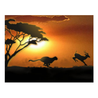 Cheetah and Gazelle post card