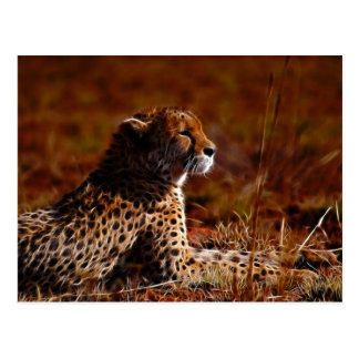 Cheetah and God Postcard