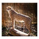 Cheetah Art Photo