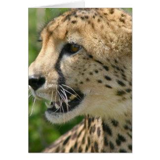 Cheetah Attack Greeting Card
