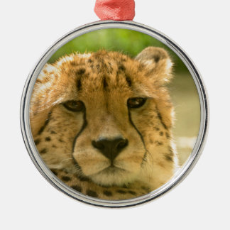 Cheetah Christmas Ornament