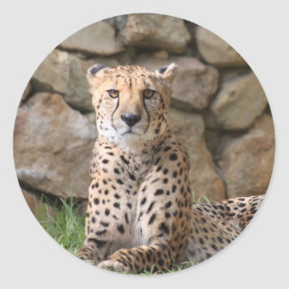 Cheetah Classic Round Sticker