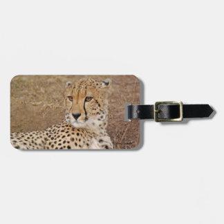 Cheetah Close-up Luggage Tag