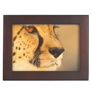 Cheetah Close-up of a female Keepsake Boxes