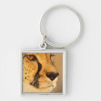 Cheetah Close-up of a female Key Ring