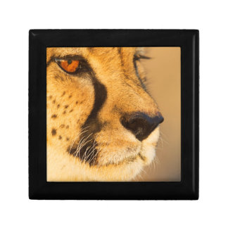 Cheetah Close-up of a female Small Square Gift Box