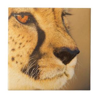 Cheetah Close-up of a female Tile