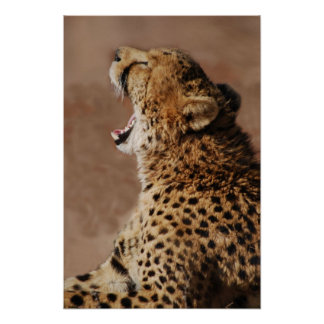 Cheetah could scare a lion print